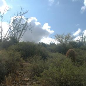 Ocotillo Ridge Preserve - east