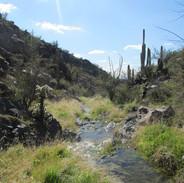 running-water-at-sierra-vista-sanctuary