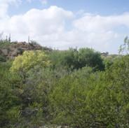 ranchitos-del-ray-south