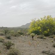 vista-ridge-south