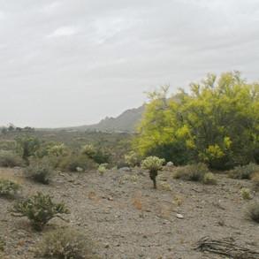 Vista Ridge Preserve - south