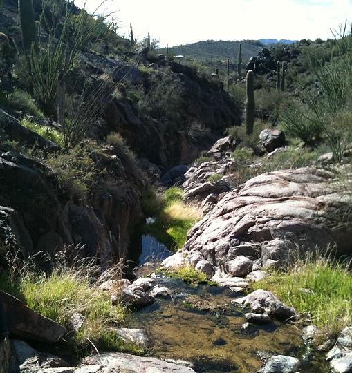 Sierra Vista Sanctuary