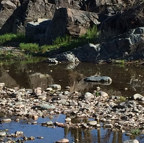 yucca-crossing-water-in-creek