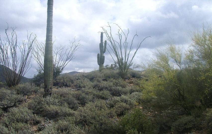 Ocotillo Ridge Preserve