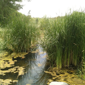 Water runs freely at the Watt Preserve - a perfect sanctuary for sensitive wildlife