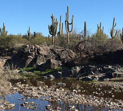 Yucca Crossing