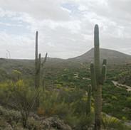 vista-ridge-east