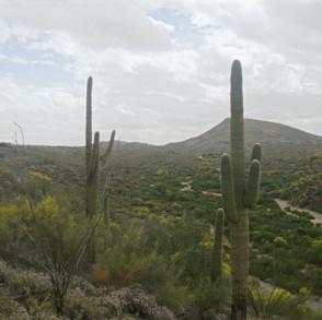 Vista Ridge Preserve - east