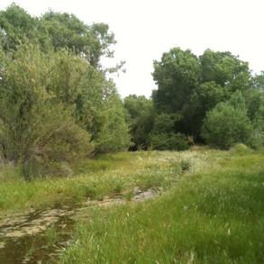 Sensitive wildlife habitat at Watt Preserve