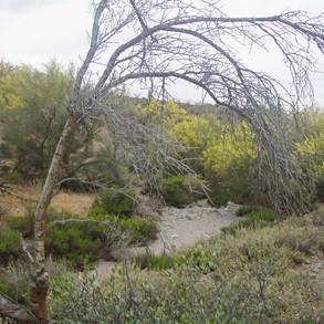 Dry wash at Vista Ridge Preserve