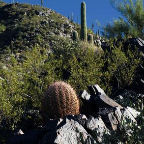 Climbing the Black Mountain trail by Jay Chatzkel