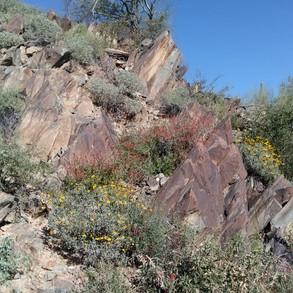 Desert Enclave Preserve