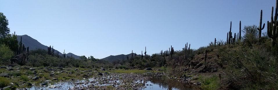 Yucca xing cc wash 3-15_edited.jpg