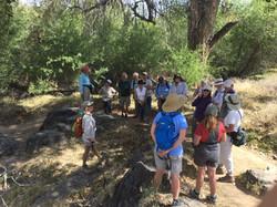 Indigenous edible and medicinal plant tour