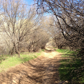 Trail at New River Nature Reserve