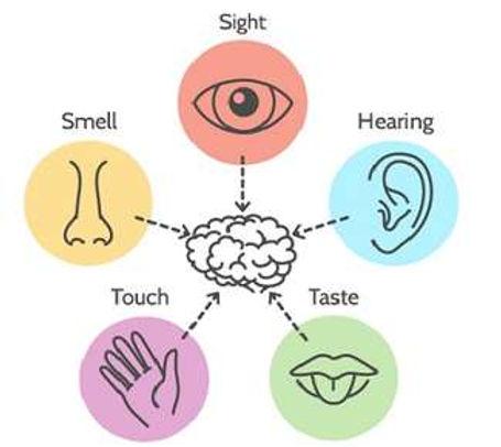 Basic Visual Skills1.jpg