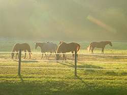 Large grass pastures.