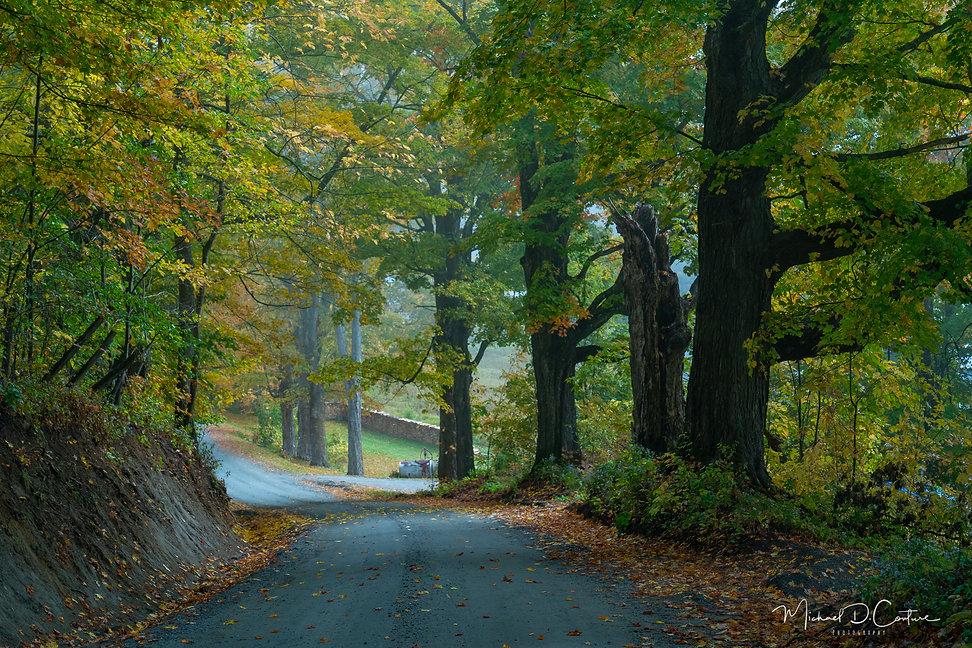 Pomfret foliage-1.jpg