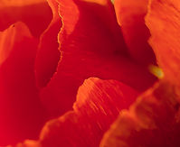 RedFlowerAbstract copy.jpg