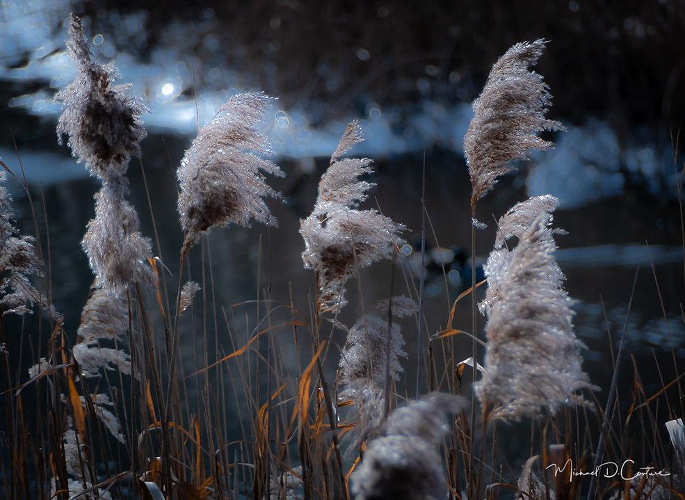 WinterGrasses-1.jpg