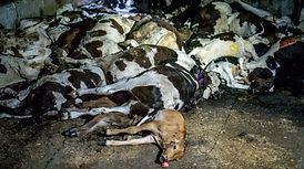dead animals.jpg