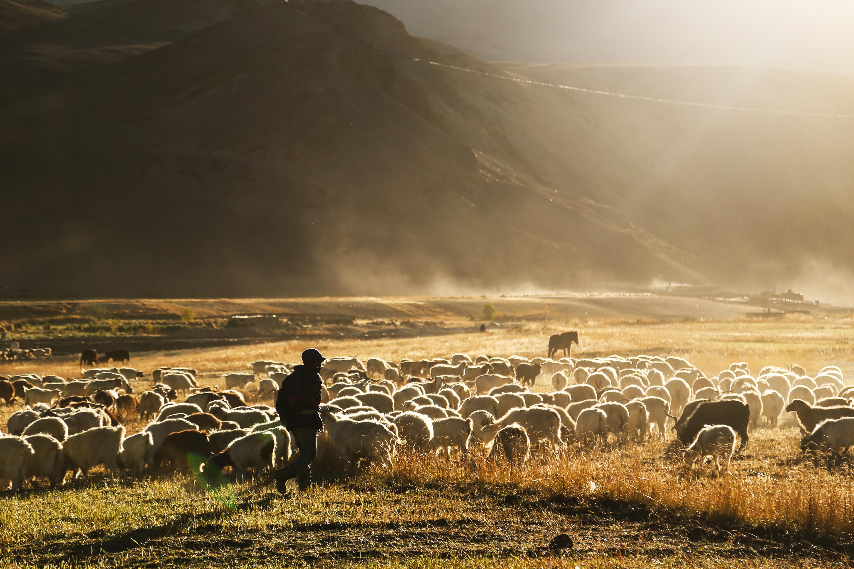 nómades en ladakh, india