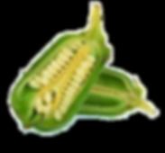sesame seed pod.png