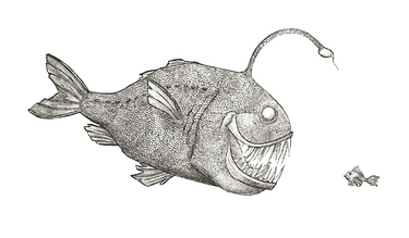 anglerfish-drawing-creepy-6.png