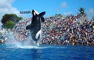 2009-Seaworld-Shamu.jpg
