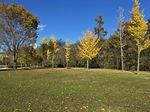 カベティー,オリジナルフォト,フォトライブラリー,晴天の公園風景