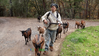Music And My Goats