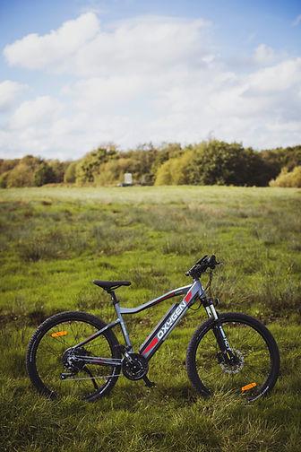 Tree_Bikes_133.jpg