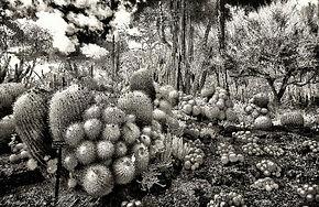 desert flower 3.jpg