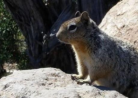Desensitized squirrel is desensitized