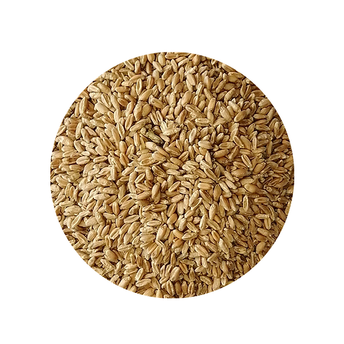 BIRDS - Bird Seed - Perky Pets -Wheat
