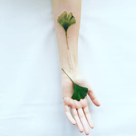 Verdes del Ecuador