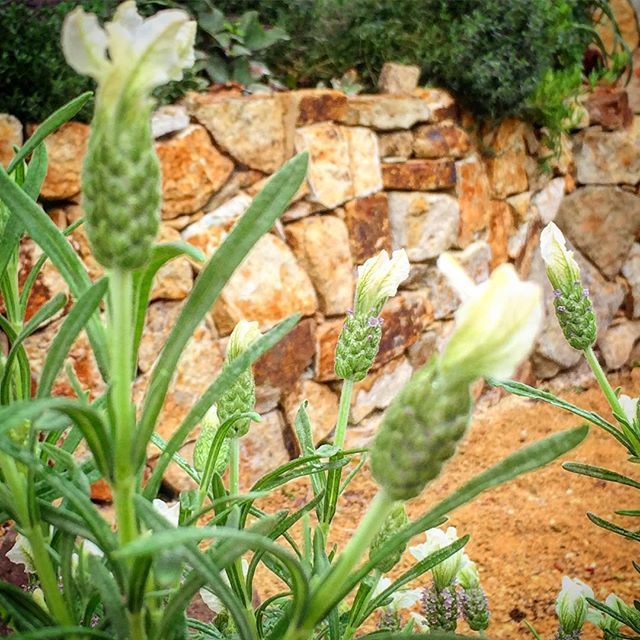 Geilston Bay Project #vandiemenslandscapes #stonewall #landscapedesign #landscaping #tuscanstyle