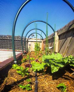 Raised garden bed, Eastern shore #vandiemenslandscapes #vegetablegarden #raisedgarden #growyourown #