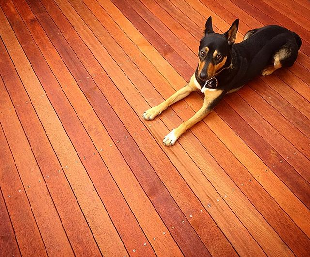 Merbau decking on our Howrah project #vandiemenslandscapes #landscaping #deck #merbaudecking #kelpie