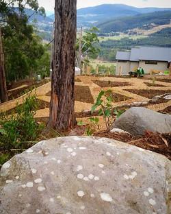 Snowy Peak project getting close to completion #vandiemenslandscapes #plantnatives #landscapedesign