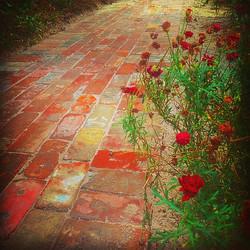 Garden path using recycled bricks