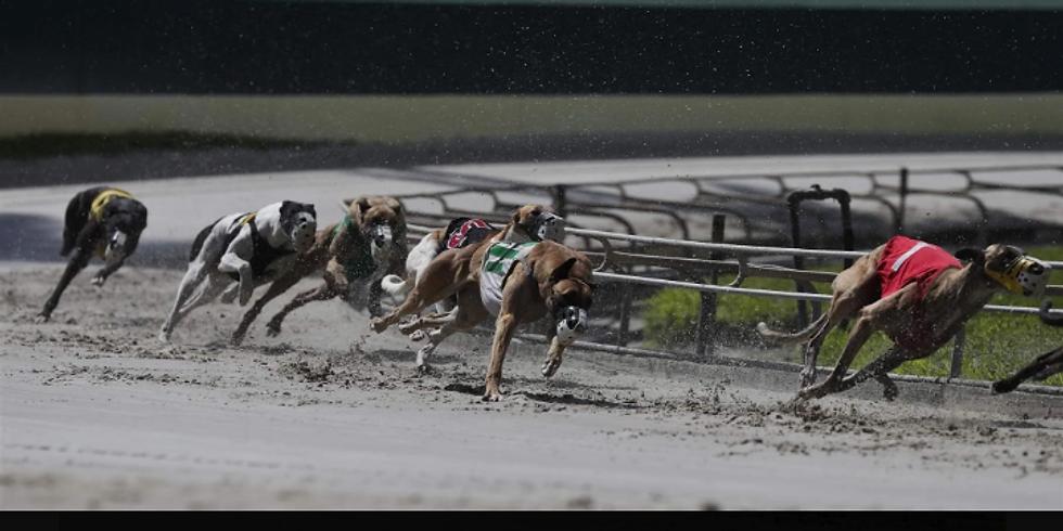Ft Meyers Dog races