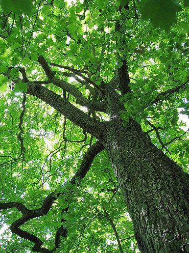 Tree 8.jpg