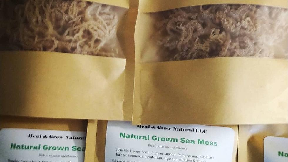 Wild crafted Sea Moss