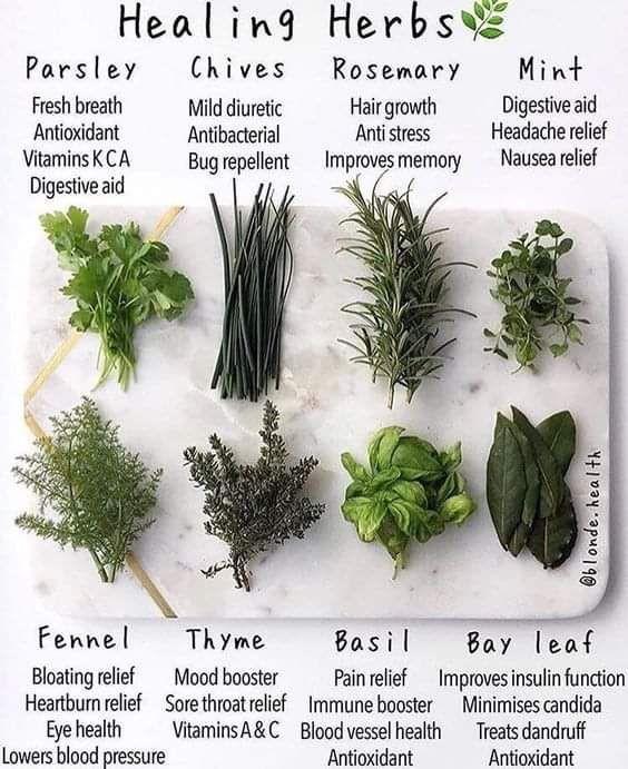 Medicinal Herb uses