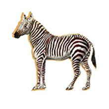 Thumbnail course zebra sticker.png