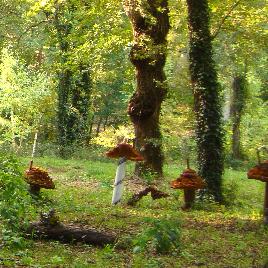 bosc de les fades i follets
