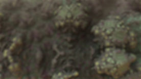 mold-1482666.jpg