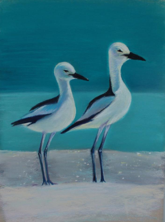Морские птички