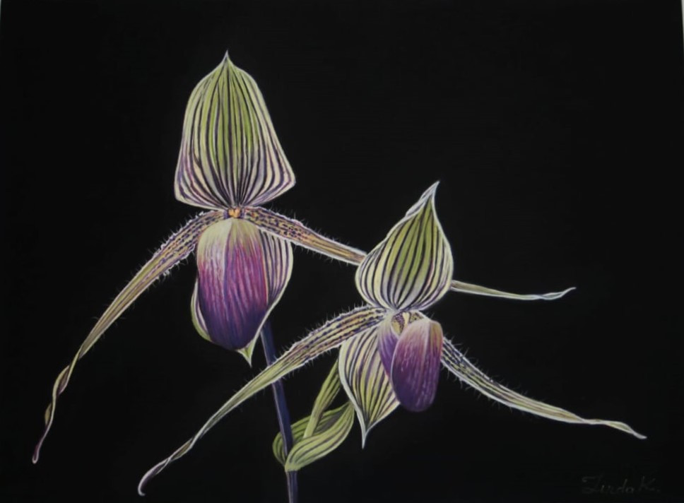 Орхидея Золото Киннабалу